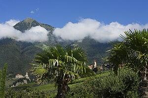 In den unteren Lagen trifft man auf Palmen und andere mediterrane Gewächse