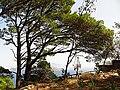 Parco Astarita - panoramio (3).jpg