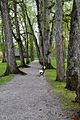 Parken ved Eidsvollsbygningen.jpg