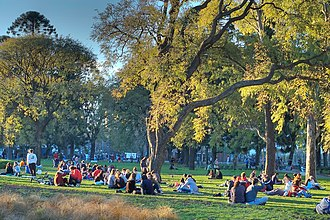 Parque Centenario - Visitors relax under Buenos Aires' characteristic tipa trees.