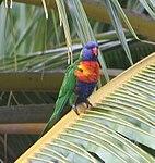 Parrot 2 (25340808549).jpg