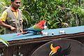 Parrot solves shell game (24997596364).jpg