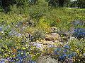 Parterre de fleurs Perth.JPG