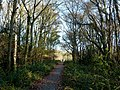 Path to Princes Avenue and the lake - geograph.org.uk - 1590141.jpg