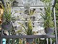 Pavillon de lAutriche (Venise) (5004970237).jpg