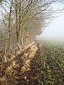 Pheasant feeder, Buckton - geograph.org.uk - 639946.jpg