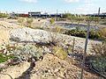Phoenix-Joint Head Dam-Salt River.jpg