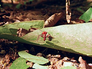 Photo Essay on Ants 3°.jpg