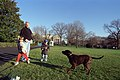 Photograph of President William Jefferson Clinton, Tyler Clinton, and Zach Rodham Playing with Buddy the Dog at the White House- 12-25-1999 (6461542931).jpg