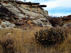 Picture Canyon (Colorado) - Picture Canyon is typical of the canyons in the Comanche National Grassland.