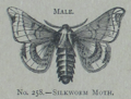Picture Natural History - No 258 - Male Silkworm Moth.png