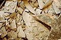 Pieces o Slate (3677978933).jpg