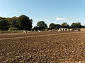 Pigs near Hungerford Newtown - geograph.org.uk - 257463.jpg