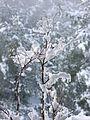 PikiWiki Israel 34007 Snow in Jerusalem.JPG