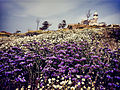 PikiWiki Israel 37254 A Mosque on Top of a Flowery Hill.jpg
