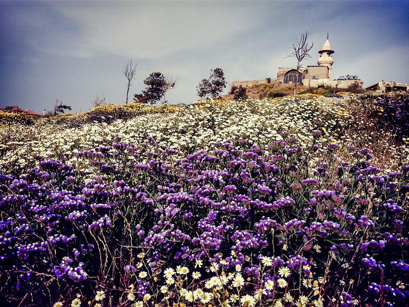 מסגד על גבעת פרחים