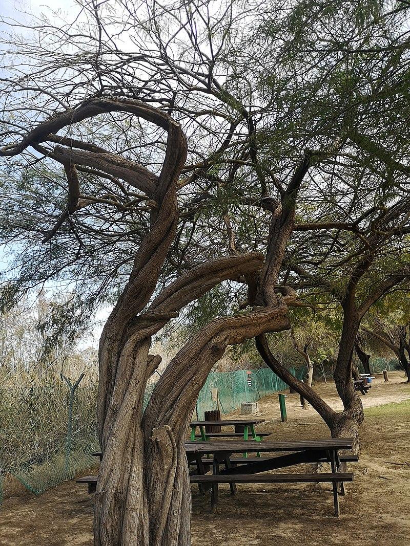 פארק אשכול-גן לאומי הבשור