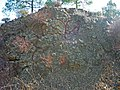 Pillow Lava of Troodos Ophiolite in Cyprus.jpg