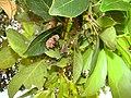 Piscina Pedreira - arredores - colmeia de vespas.jpg