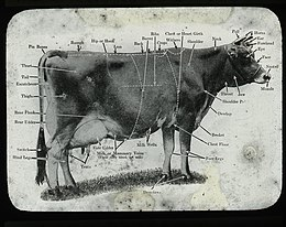 A Dairy Cow With Significant Features Labeled