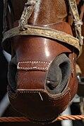 Un protège nez pour cheval