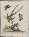 Polytmus macrourus - 1700-1880 - Print - Iconographia Zoologica - Special Collections University of Amsterdam - UBA01 IZ19100039.tif