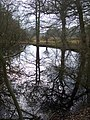 Pond in Breaches Wood - geograph.org.uk - 1703048.jpg