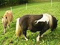 Poneys (Black tobiano) (1).jpg