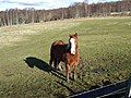Pony pasture - geograph.org.uk - 353328.jpg