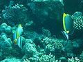 Port Ghalib march 2006-0125.jpg
