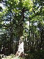 Prírodná rezervácia Borsukov vrch 001.jpg