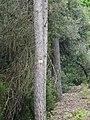 Prop de Mas Pins P1240562.JPG
