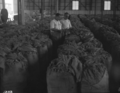 Queensland State Archives 1745 South Queensland Tobacco Growers Association Building Northgate Brisbane June 1955.png