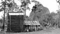 Queensland State Archives 4318 Tobacco growing at Beerburrum log barn 1933.png