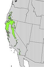 Quercus kelloggii range map 2.jpg