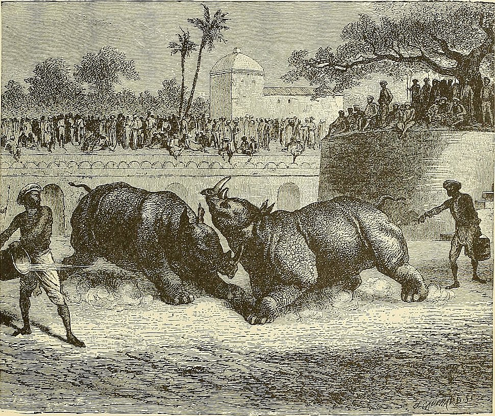 RHINOCEROS FIGHT AT BARODA from page 299 of %22Cyclopedia universal history - embracing the most complete and recent presentation of the subject in two principal parts or divisions of more than six thousand pages%22 (1895) (14596672017)