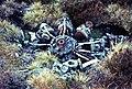 Radial engine from WW2 plane crash - geograph.org.uk - 649535.jpg
