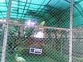 Rani Baugh Bombay (Jijamata Udyan Mumbai) - panoramio - Camaal Mustafa Sikan… (13).jpg
