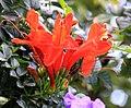 Red Flower (3309411464).jpg