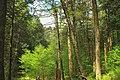 Relict Woods (8737646222).jpg