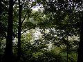 Remscheid - Eschbachtalsperre 22 ies.jpg