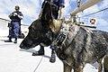 Response Dog (16647569067).jpg