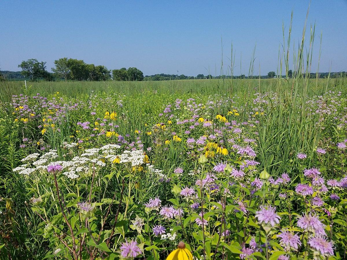 Prairie Restoration Wikipedia