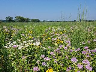 Prairie restoration Type of habitat conservation