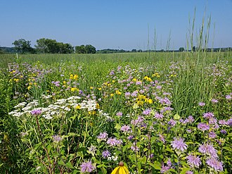 Prairie restoration - A tallgrass prairie planting in Illinois.