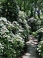 Rhododendrongarten Tiergarten Berlin.jpg