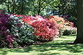 Rhododendronpark Bremen 20090513 218.JPG