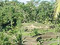 Rice terrace of Tegallalan 200507-5.jpg