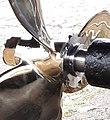 Right-handed 3-blade bronze propeller & stainless steel rope cutter.jpg