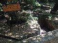 Riserva naturale orientata Bosco di Santo Pietro 09.jpg
